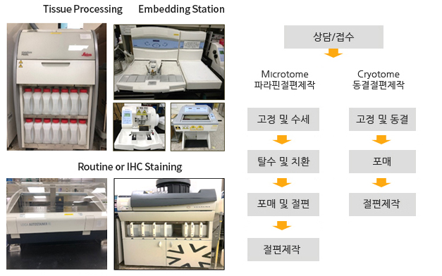 Tissue Processing:Fixation,Dehydration,Clearing,Infiltration/Embedding Station:Cast Block,Solidification,Cold plate/Sectioning Paraffin or Plastic:Rotary,Microtomes/Routine or IHC Staining:/Cryo Sectioning:Clinical Cryostats,Research Cryostats,IHC, ISH etc/ 상담/접수-고정및 수세, 탈수 및 치환-포매 및 절편-절편제작:Microtome 파라핀절편제작, 고정 및 동결-포매-절편제작:Cryotome 동결절편제작